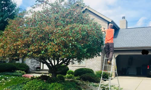 Tree Trimming Services Wisconsin